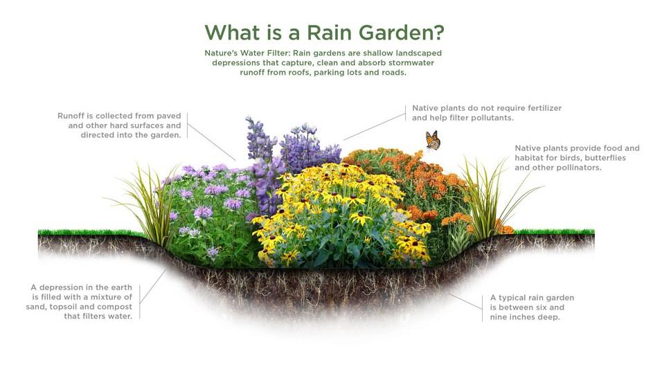 what-is-a-rain-garden